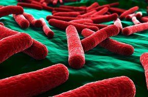 🔒 Das Mikrobiom des Urogenitaltraktes